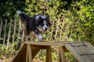 Cours d'éducation de base pour chien