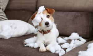 Consultation en éducation et comportement chat et chien